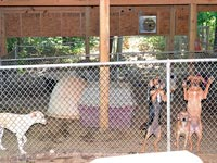 Pickens Animal Rescue Ranch