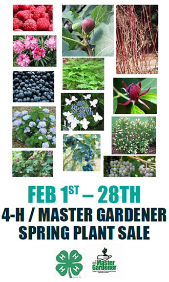 4-H Master Gardener Plant Sale Begins February 1st