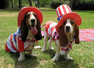 The Fourth of July and Your Pet