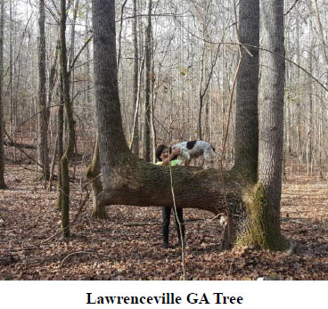 Trail Tree Newsletter March 2017