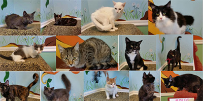 It's National Cat Day and 60 CATS NEED A LOVING HOME!