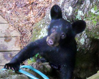 STASH YOUR TRASH TO PREVENT BEAR ENCOUNTERS - Birdseed, Pet Food Also Among Top 3 Non-natural Food Sources for Bears