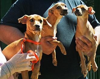 Four Legged Love from Bonnie's Pups
