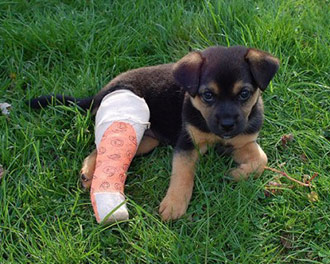 Fractures in Dogs and Cats