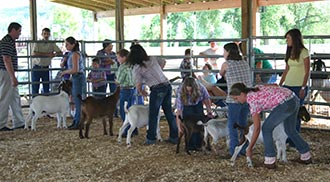 Pickens County 4-H Goat Team Finishes Year With Success
