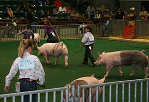 Pickens County 4-H Hog Team Has A Great Season