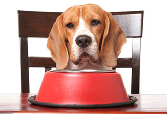 The Importance of a Balanced Diet for Your Pet