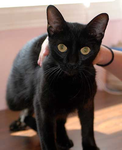 Don't You Want To Give This Black Beauty A Home?