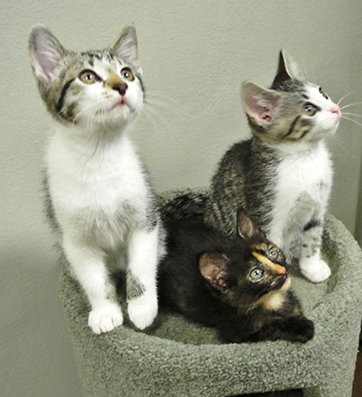 KITTENS � Two for the Price of One!