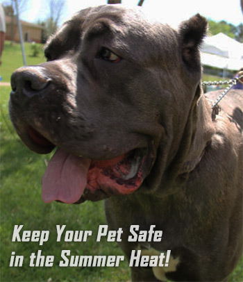 Keep Your Pet Safe in the Summer Heat