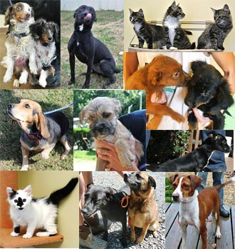 PICKENS RESIDENTS PULL TOGETHER TO FIND FOREVER HOMES FOR HOMELESS PETS IN 2012