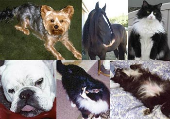 Most Beautiful Pet Final Week of Voting - Votes means funds for local animal rescue group