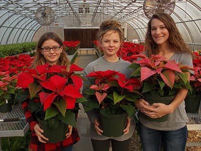 PHS Poinsettia Sale is Next Week