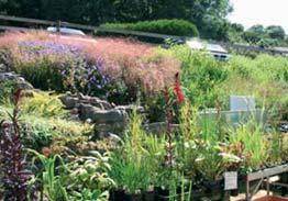 Spring Plant Sale at Sharptop Arts Association