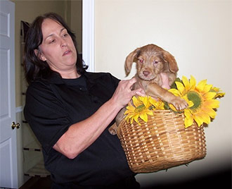 A Basket Full of Sunshine! at the May 25th DROP BY & DONATE DAY at the Pickens County Animal Shelter