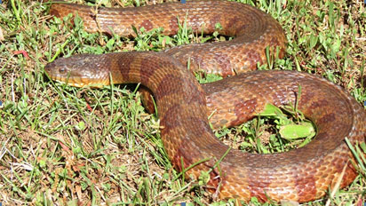 Snake Winter Activity
