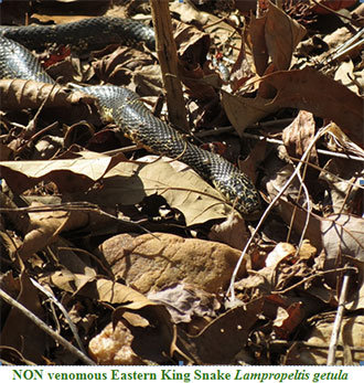 With Cooler Weather, Expect More Snake Activity of Warmer Days