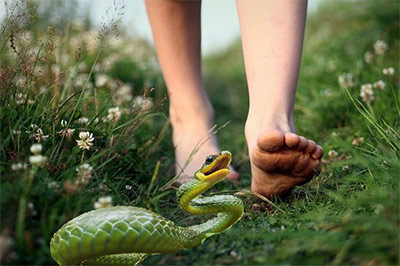 Spring Snake Warning