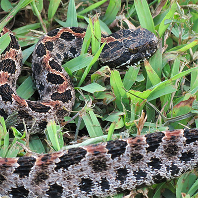Warmer Weather Brings Snake Activity