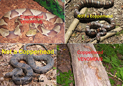 Copperhead or Not?