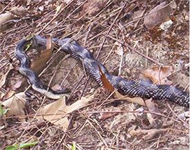 Snake Warning - Daytime Movers