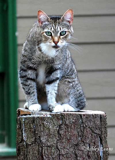 Older Cat Needs Adopting