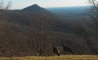Overlooks on Burnt Mountain Road